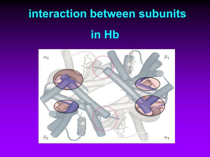 interaction between subunits in Hb