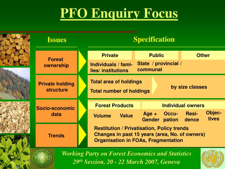 Pfo enquiry focus