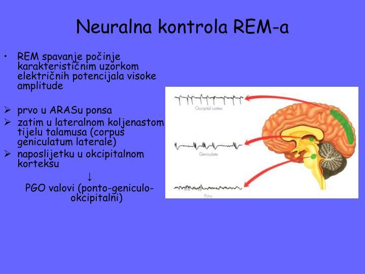 Neuralna kontrola REM-a
