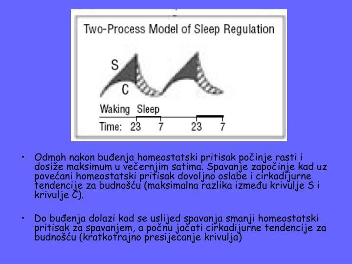 Odmah nakon buđenja homeostatski pritisak počinje rasti i dosiže maksimum u večernjim satima. Spavanje započinje kad uz povećani homeostatski pritisak dovoljno oslabe i cirkadijurne tendencije za budnošću (maksimalna razlika između krivulje S i krivulje C).