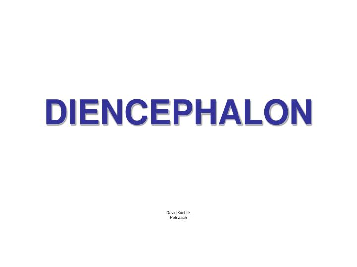 diencephalon n.