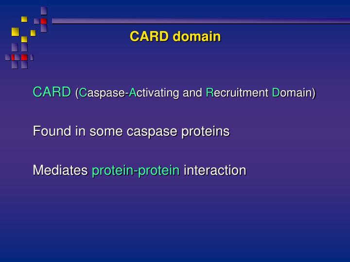 CARD domain