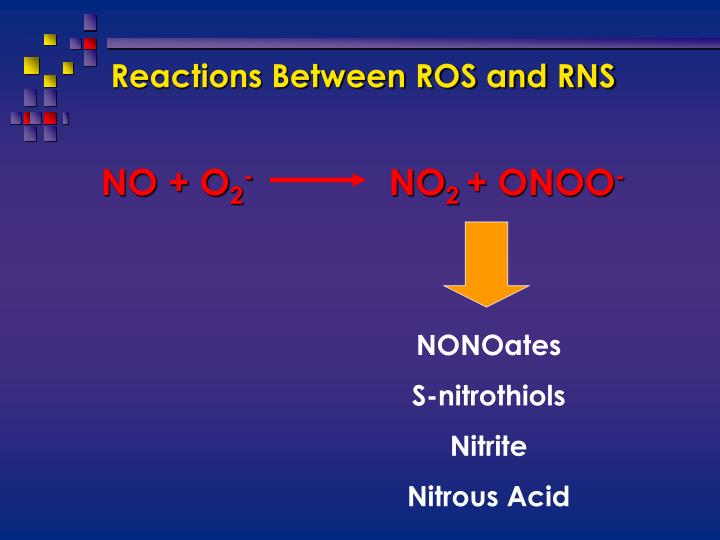 Reactions Between ROS and RNS