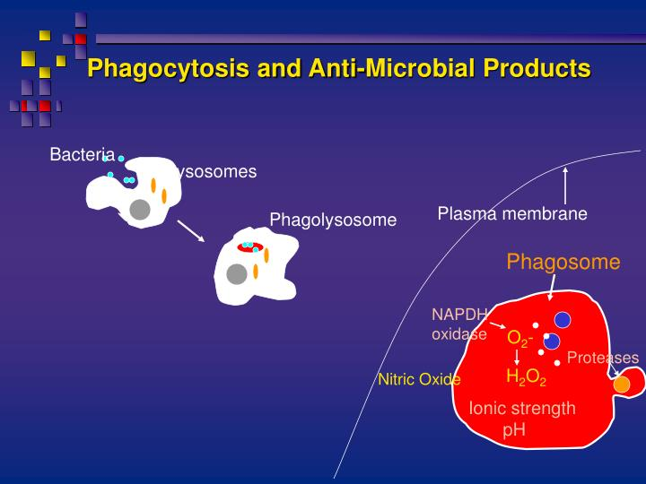 Phagocytosis and Anti-Microbial Products