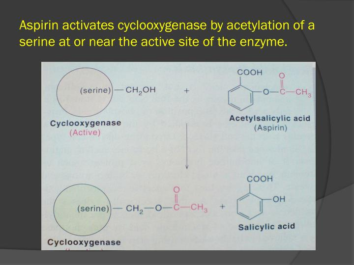 Aspirin activates cyclooxygenase by acetylation of a serine at or near the active site of the enzyme.