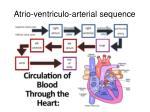 atrio ventriculo arterial sequence1