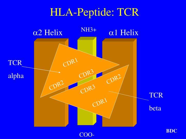 HLA-Peptide: TCR