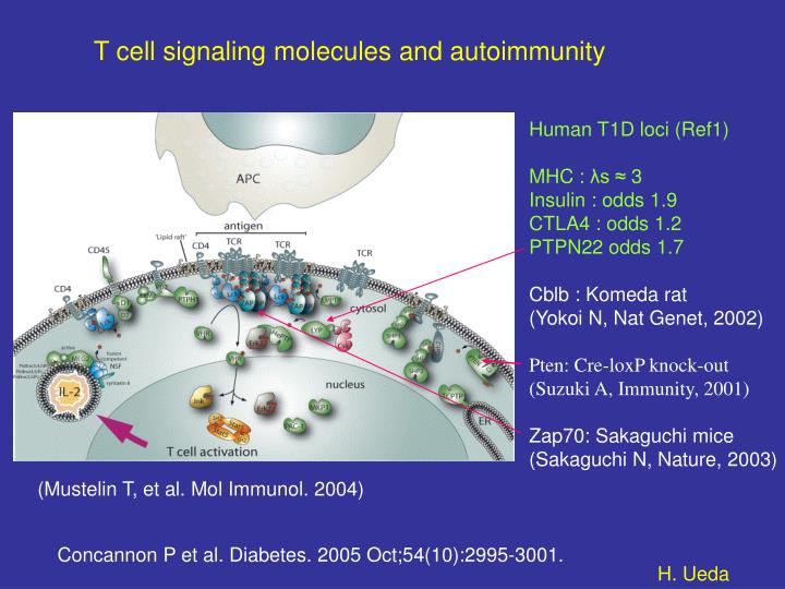 T cell signaling molecules and autoimmunity