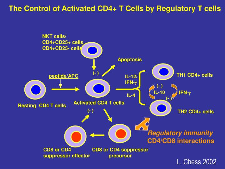 The Control of Activated CD4+ T Cells by Regulatory T cells
