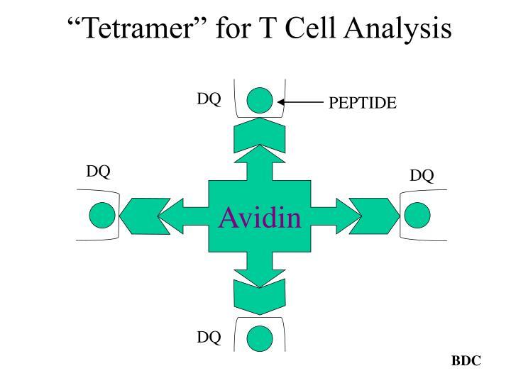 """""""Tetramer"""" for T Cell Analysis"""