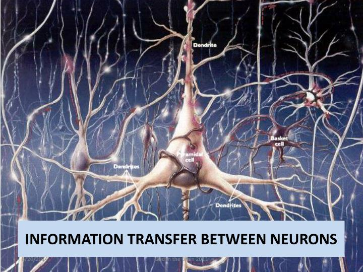 INFORMATION TRANSFER BETWEEN NEURONS