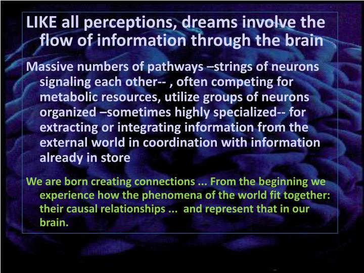 LIKE all perceptions, dreams involve the flow of information through the brain
