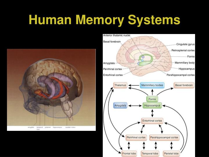 Human Memory Systems