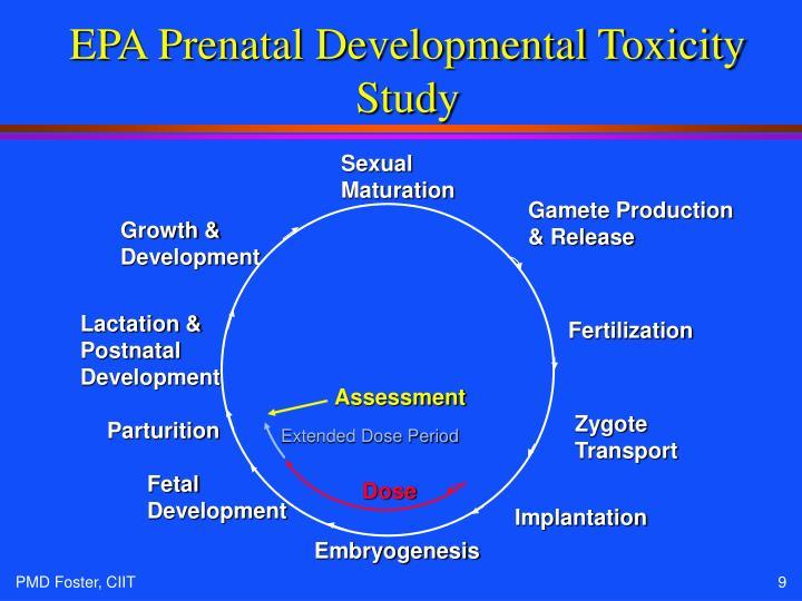 EPA Prenatal Developmental Toxicity Study