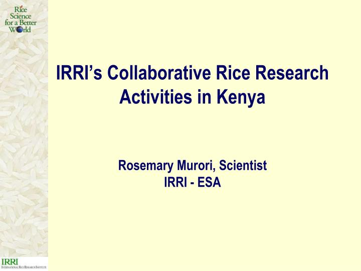 IRRI's Collaborative Rice Research Activities in Kenya