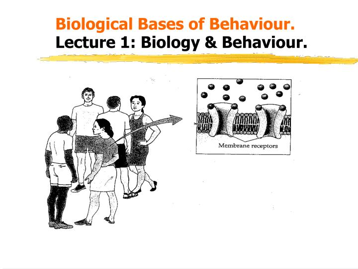 Biological bases of behaviour lecture 1 biology behaviour