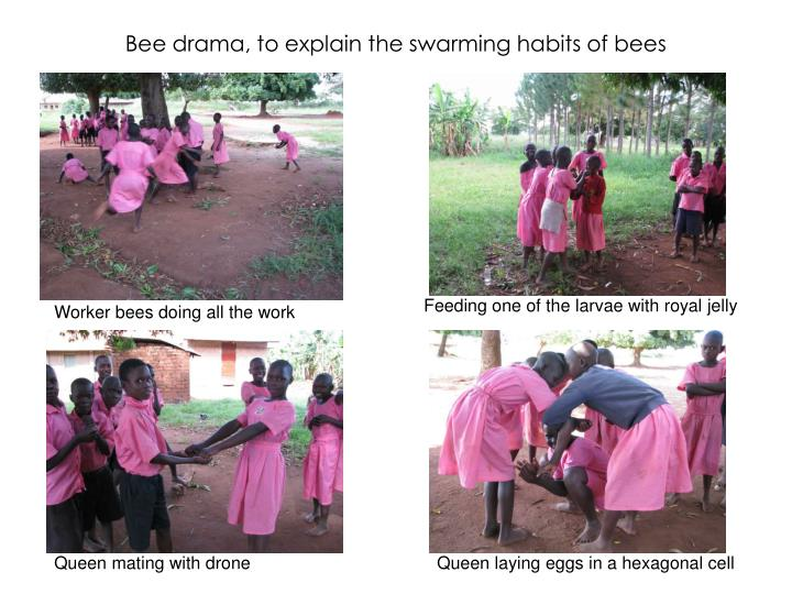 Bee drama, to explain the swarming habits of bees
