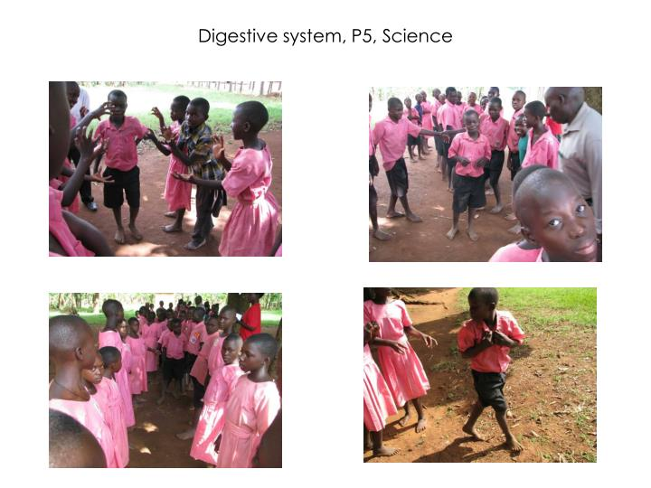 Digestive system, P5, Science