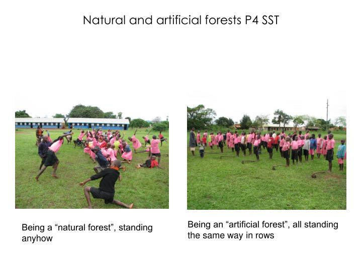 Natural and artificial forests P4 SST