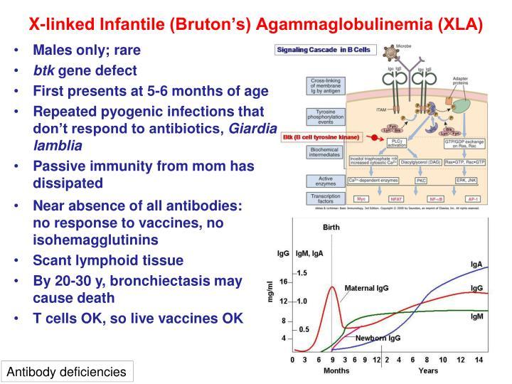 X-linked Infantile (Bruton's) Agammaglobulinemia (XLA)