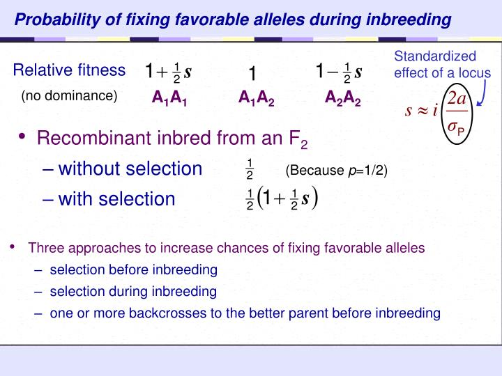 Probability of fixing favorable alleles during inbreeding