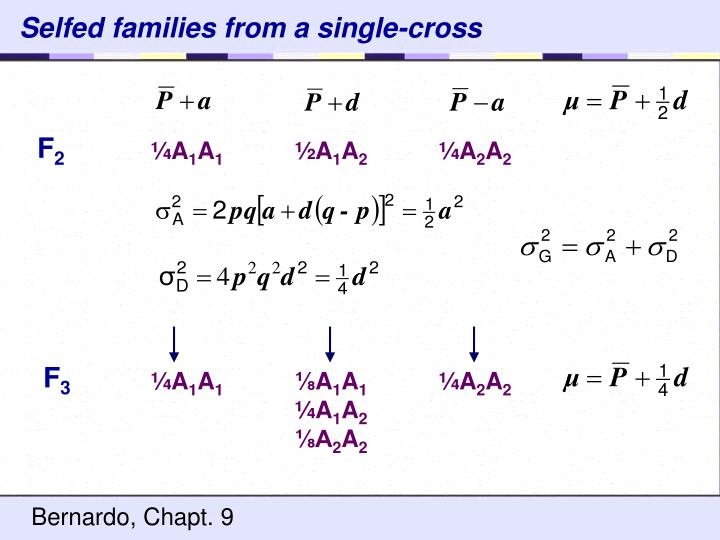 Selfed families from a single-cross