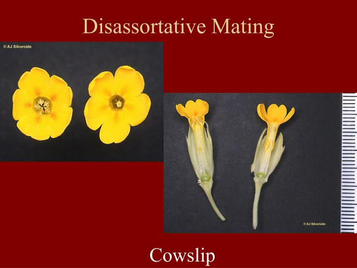 Disassortative Mating