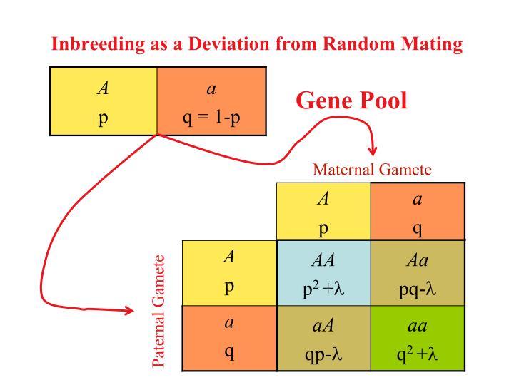 Inbreeding as a Deviation from Random Mating