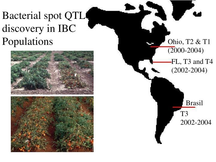 Bacterial spot QTL discovery in IBC Populations