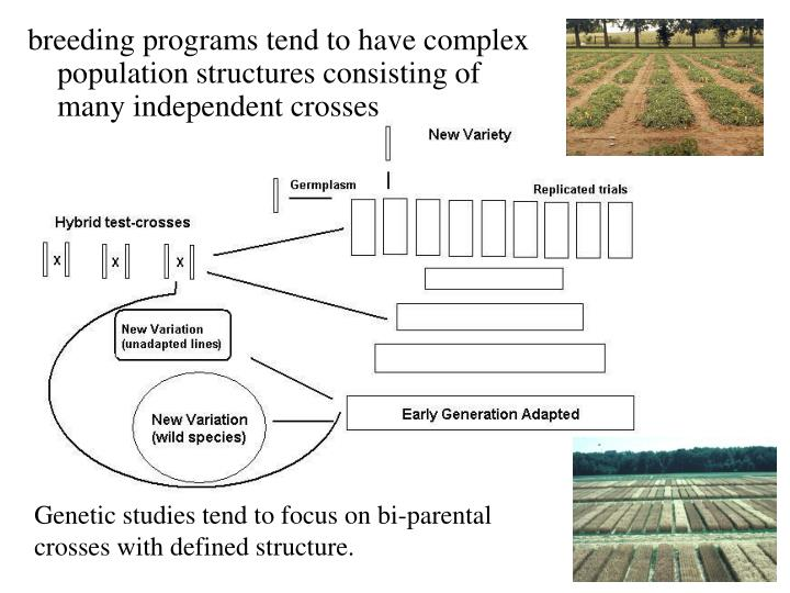 Breeding programs tend to have complex population structures consisting of many independent crosses