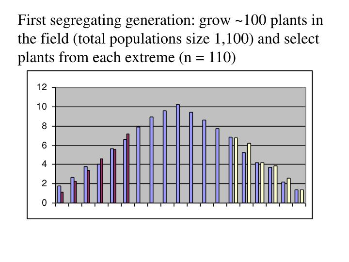 First segregating generation: grow ~100 plants in the field (total populations size 1,100) and select plants from each extreme (n = 110)