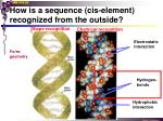 how is a sequence cis element recognized from the outside2