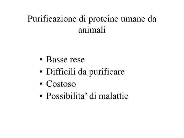 purificazione di proteine umane da animali n.
