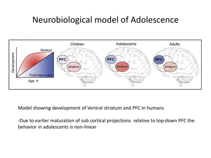Neurobiological model of Adolescence