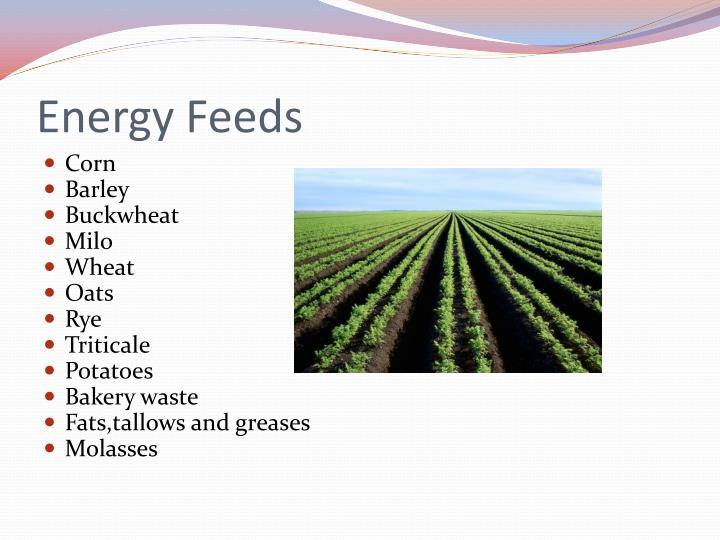 Energy Feeds