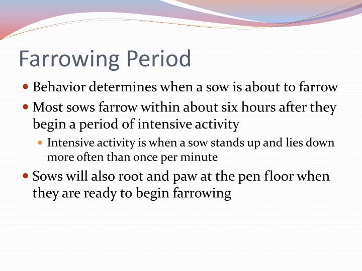 Farrowing Period