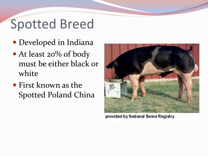 Spotted Breed
