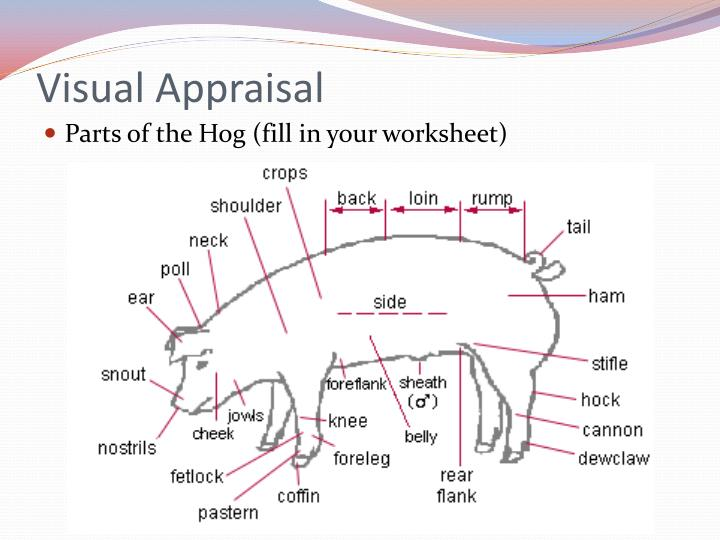 Visual Appraisal