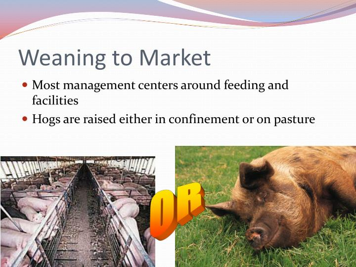 Weaning to Market