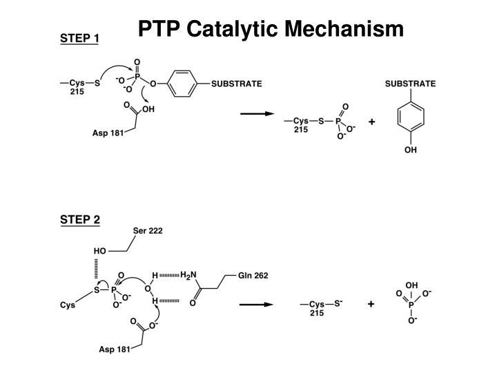 PTP Catalytic Mechanism