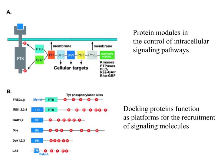 Protein modules in