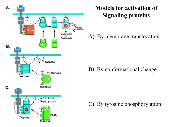 Models for activation of