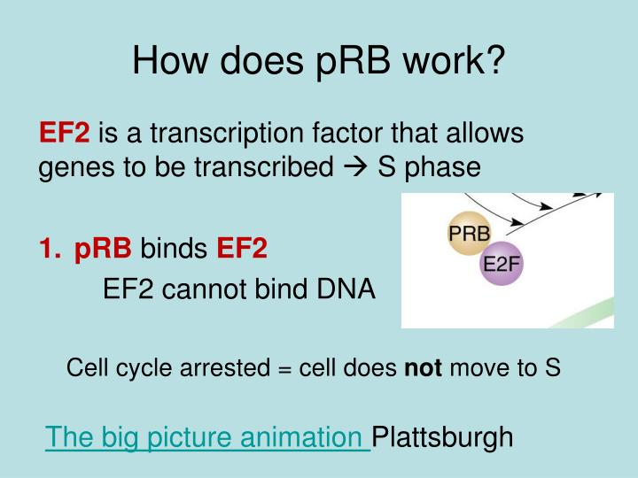 How does pRB work?