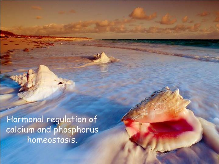 hormonal regulation of calcium and phosphorus homeostasis n.