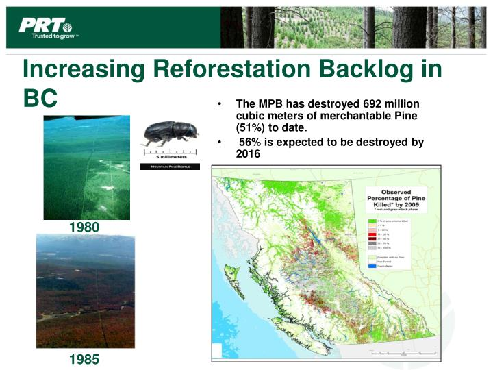 Increasing Reforestation Backlog in BC