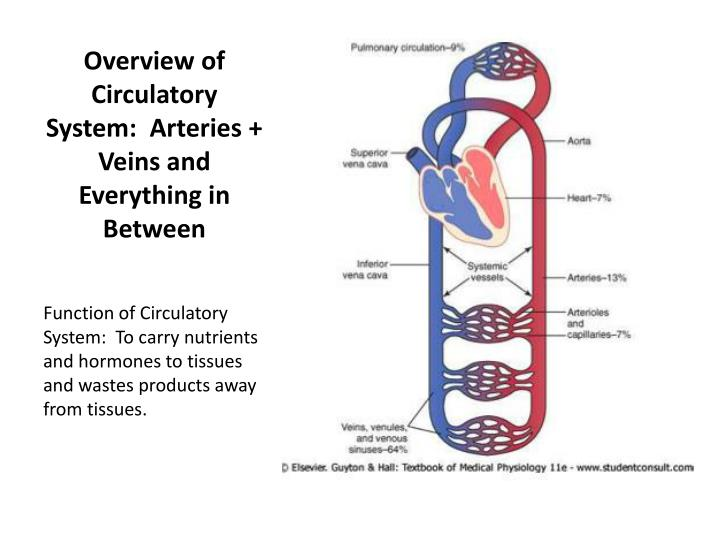Overview of Circulatory System:  Arteries + Veins and Everything in Between