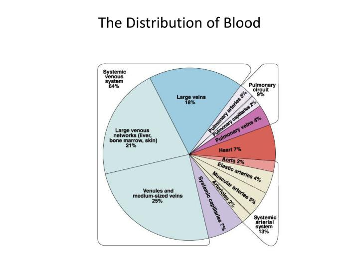 The Distribution of Blood