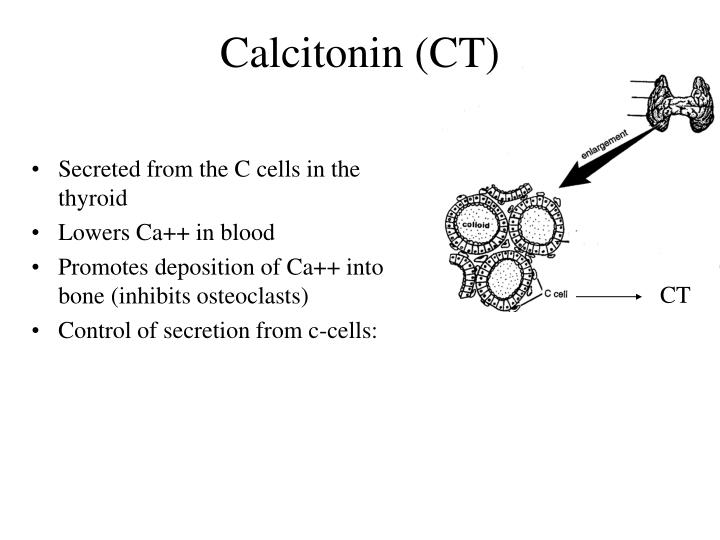 Calcitonin (CT)