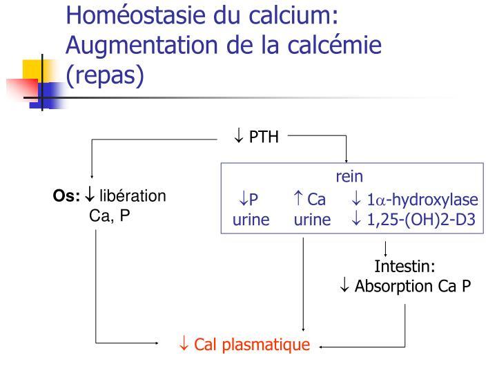 Homéostasie du calcium: Augmentation de la calcémie (repas)