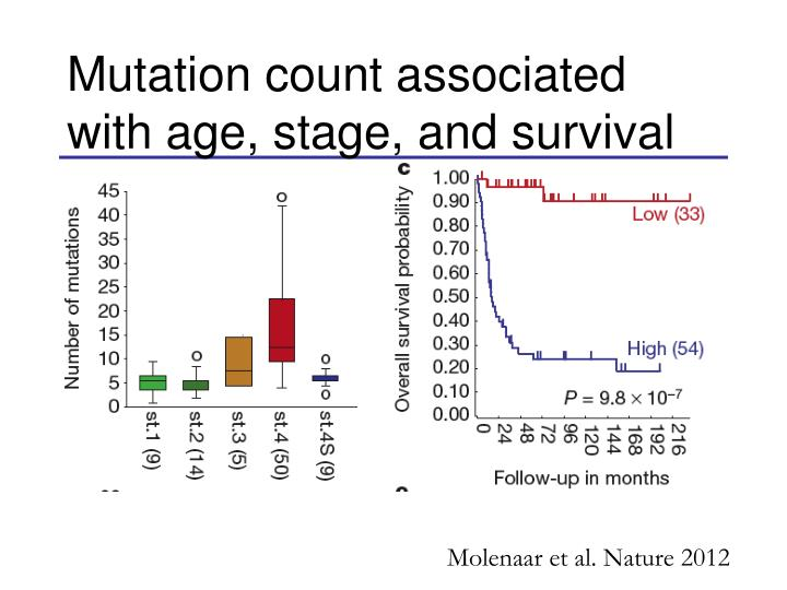 Mutation count associated with age, stage, and survival